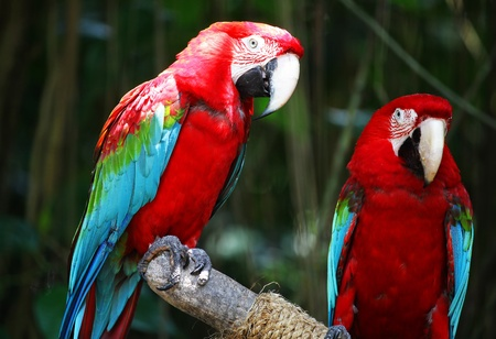 Macaw Parrots Stock Photo