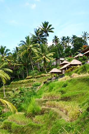 bamboo house: bamboo house at rice field in ubud