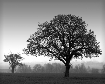 Tree Silhouettes Stock Photo - 1719456