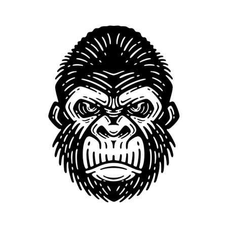 gorilla head illustration, isolated image, on a white background