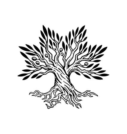 beautiful illustration of olive tree and root logo, in vintage style.