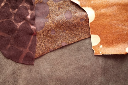 leather samples  photo