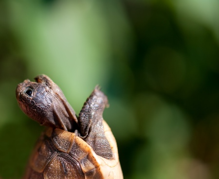 baby turtle: screaming baby turtle