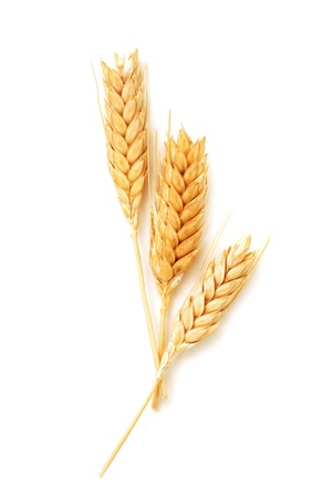 corn flour: Golden wheat ears isolated on white background Stock Photo