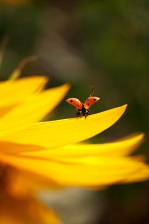ladybug Archivio Fotografico