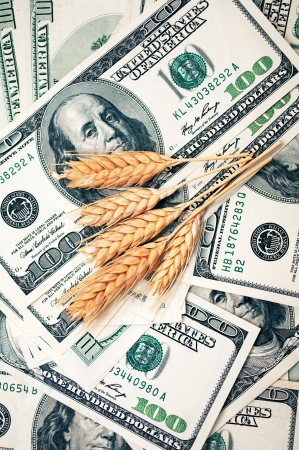 cash crop: golden spikes with dollars Stock Photo
