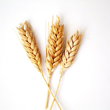 ear of corn: Wheat ears on white background close up