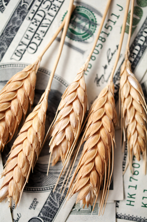 wheat: golden spikes of wheat with dollar bills