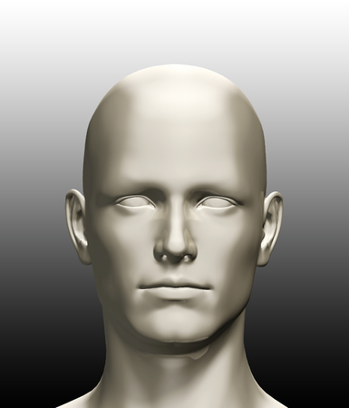human head: 3d rendered illustration of a human head