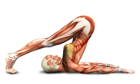 anatomy naked woman: 3D female medical figure in yoga pose rendered illustration Stock Photo