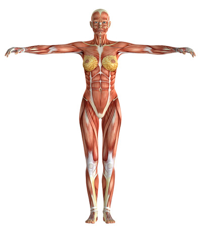 Chiffre médical féminin 3D isolé sur fond blanc Banque d'images - 54767120