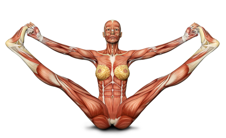 anatomy nude: 3D female medical figure in yoga pose rendered illustration Stock Photo