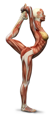 nude body: 3D female medical figure in yoga pose rendered illustration Stock Photo