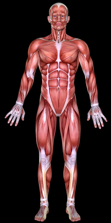 man full body: 3d male body anatomy isolated on black Stock Photo