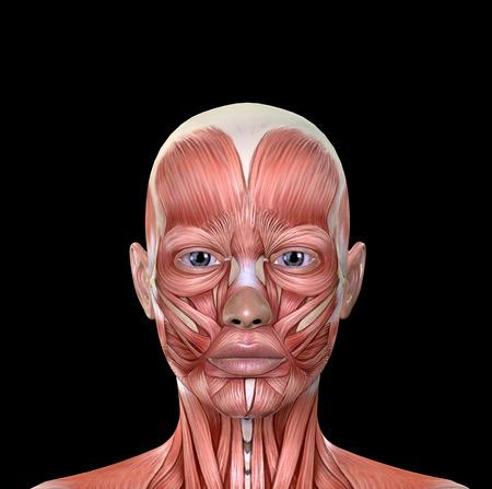 Femmina Viso Muscoli Anatomia isolato su sfondo nero Archivio Fotografico - 56325533