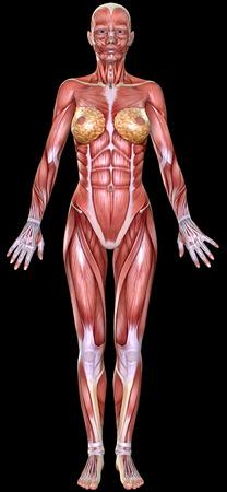 tendon: 3D  female body anatomy isolated on black Stock Photo