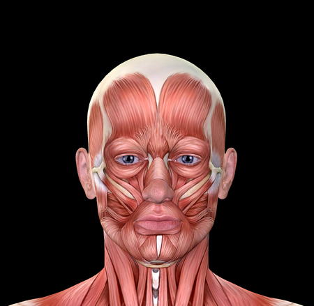 Male Face Muscles Anatomy isolated on black 版權商用圖片