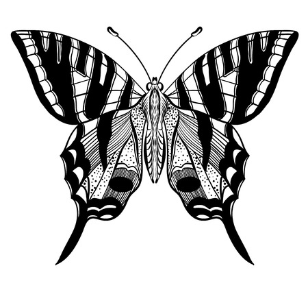 butterfly: Hand drawn vector butterfly illustration isolated on white background