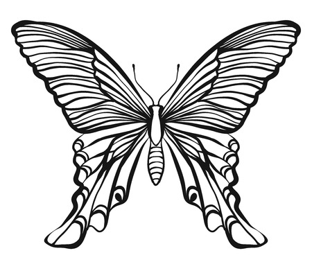 butterfly isolated: Hand drawn vector butterfly illustration isolated on white background