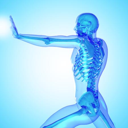 huesos: 3d esqueleto masculino médico con la silueta del cuerpo