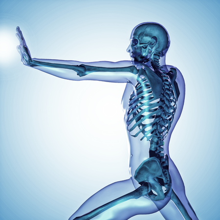 strong skeleton: 3d medical male skeleton with body silhouette