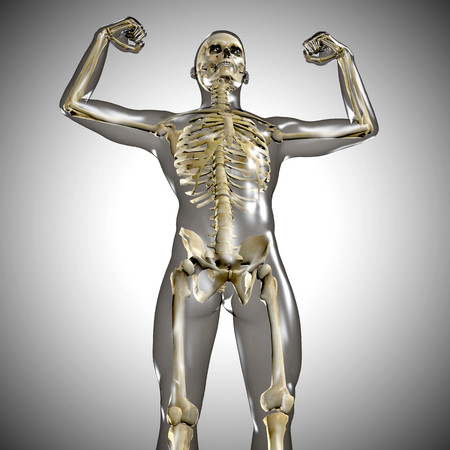 strong men: 3d medical male skeleton with body silhouette
