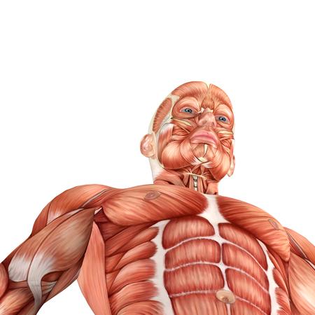 anatomically: 3d Male anatomy bottom view Stock Photo