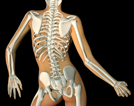 naked woman back: 3d render of a back woman body and skeleton showing close up of torso