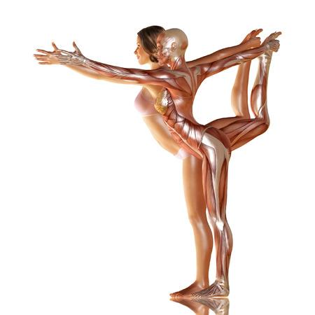 3d geef van vrouwenlichaam met spier anatomie doet yoga illustratie