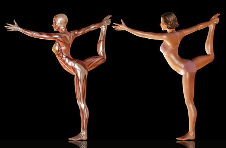 3D-Darstellung mit Muskelanatomie der Frau Körper Yoga Illustration tun