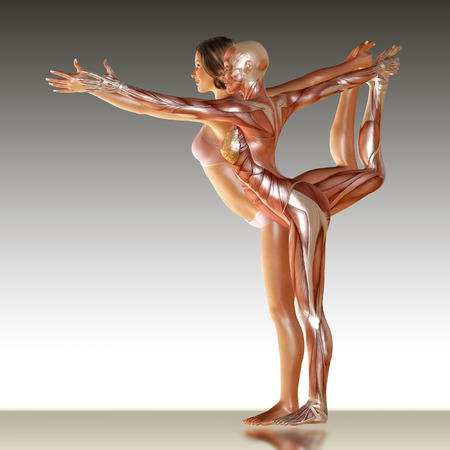 3d render of woman body with muscle anatomy doing yoga illustration Standard-Bild