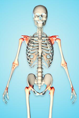 skin injury: 3d rendered illustration of a male skeleton showing torso