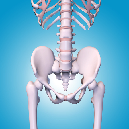 Medical accurate illustration of the hip