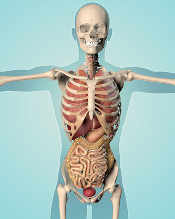 3D render of a medical image of a male figure showing internal organs