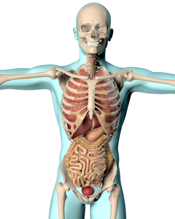 vitals: 3D render of a medical image of a male figure showing internal organs