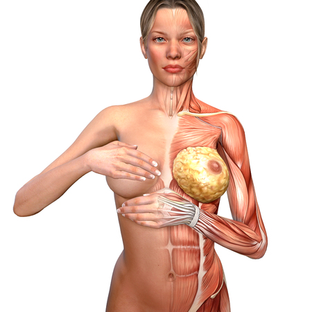 3d illustration of a woman anatomy controlling her breast Stock Photo