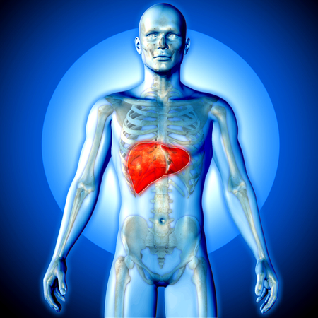 3D render of a medical image of a male figure with liver highlighted