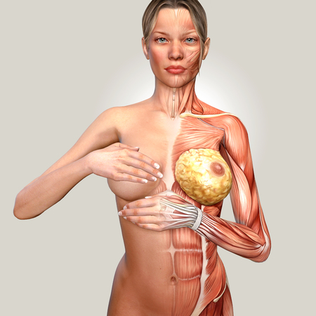 naked female body: 3d illustration of a woman anatomy controlling her breast Stock Photo