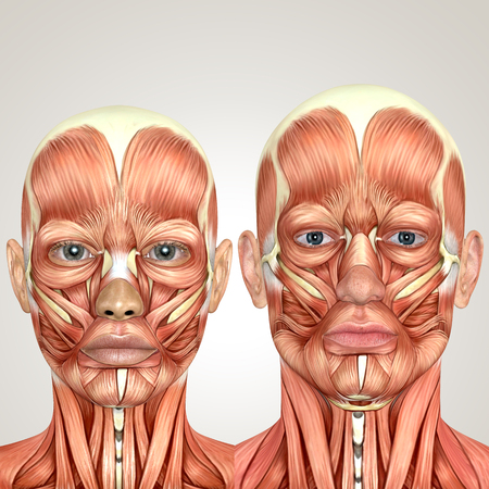 3d male and female face anayomy together Stock Photo