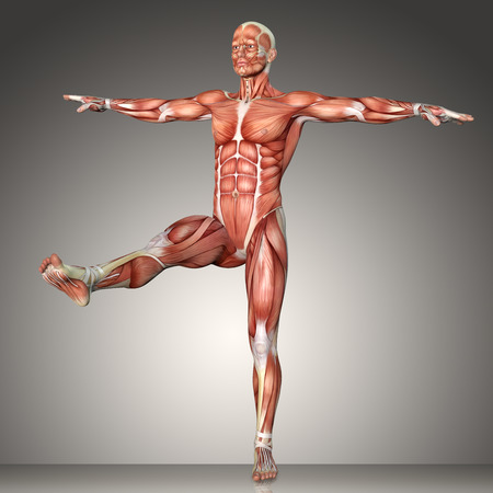 3d rendering of a male anatomy figure in  exercise pose
