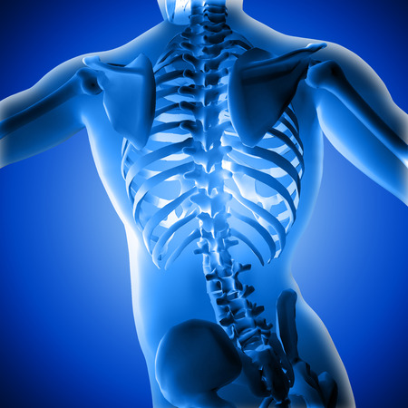 Torso of ta medical 3d figure under X-rays