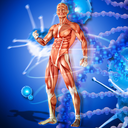3d illustration of  a male anatomy. Defense against viral or bacterial disease Stock Photo