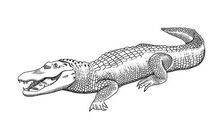 Grafica a matita disegnata a mano, coccodrillo, alligatore, coccodrillo. Incisione, stile stencil. Logo in bianco e nero, segno, emblema, simbolo. Timbro, sigillo. Illustrazione semplice. Schizzo.