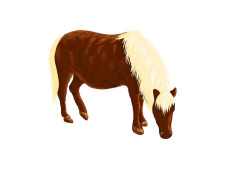 Caballo miniatura americano, ilustración de vector de bosquejo colorido doodle, dibujo de animales dibujados a mano, aislado en blanco. Ilustración de vector