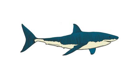 Große weiße Haihand, die bunte Vintage-Gravurillustration zeichnet