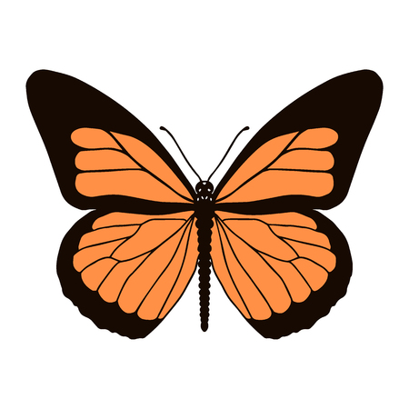 Realistic monarch butterfly in colour isolated on white background. Vector illustration.