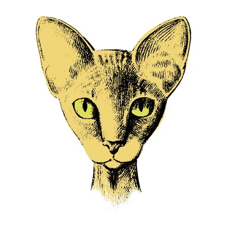 Vector cat of breed the Sphinx head is symmetrical sketch graphics colorful vector illustration, isolated on white.