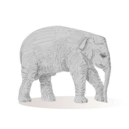 Little elephant is walking, moving forward, sketch vector graphics black and white drawing. African wildlife doodle illustration. Portrait of baby elephant, monochrome. Pencil drawing imitation.
