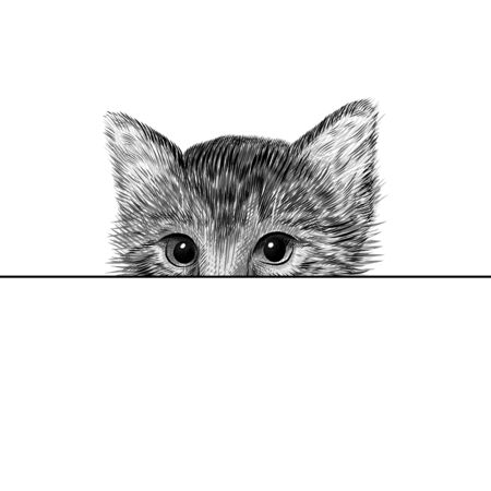 Little cat, kitten black and white vector illustration. Hand drawn sketch drawing. Pet portrait, peeking out from behind a sheet of paper. Cute animal background.