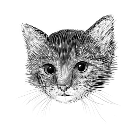 Little cat, kitten black and white vector illustration. Hand drawn sketch drawing. Pet portrait, Cute animal background. Illustration